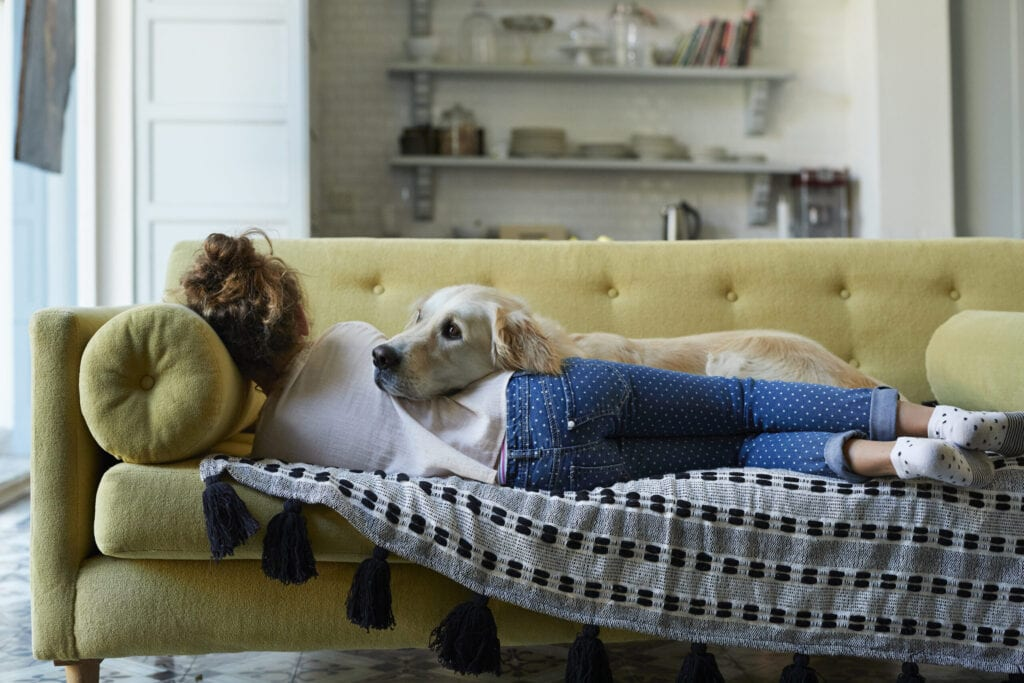Everyday life at home with dogs