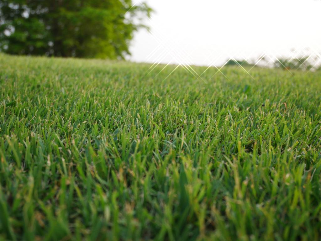 Closeup of bermuda grass lawn