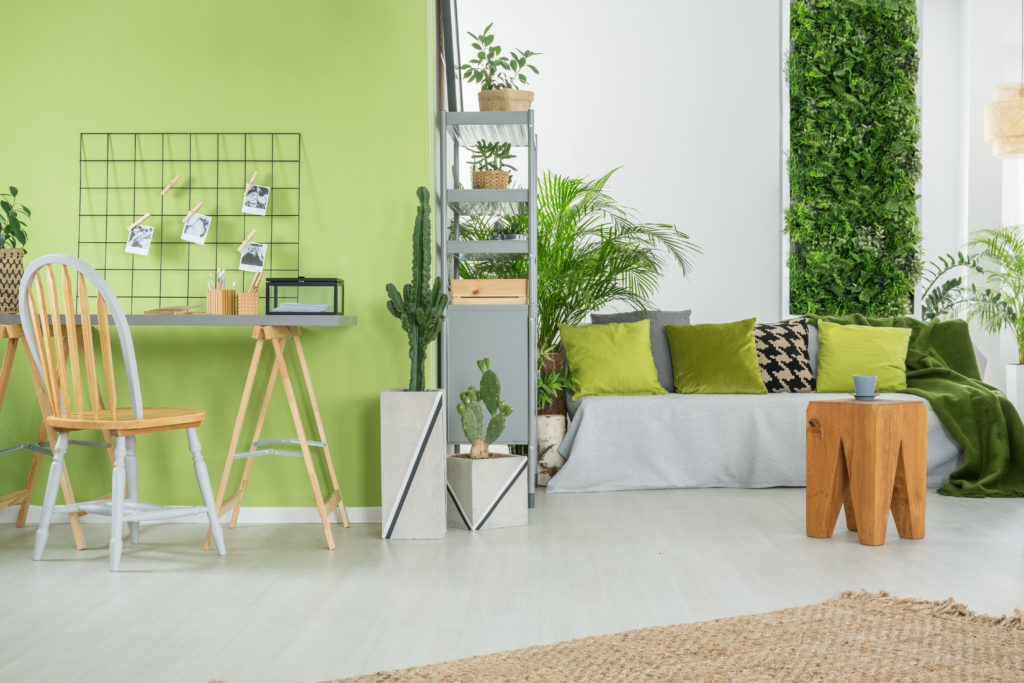Living room with lime green walls and various plants