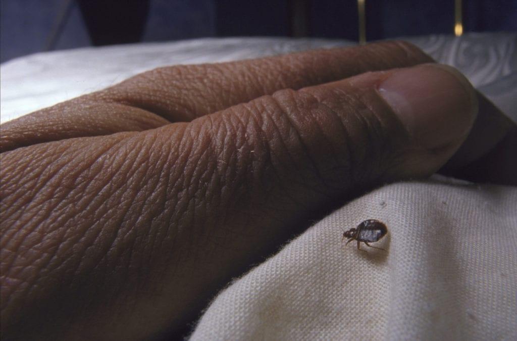bedbug approaching hand