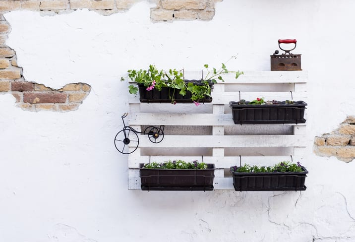 Pallet used for backyard vertical garden
