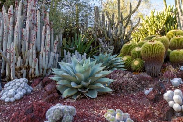 Desert cactus garaden