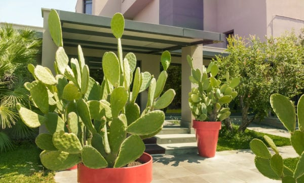 Cactus in front of modern style house