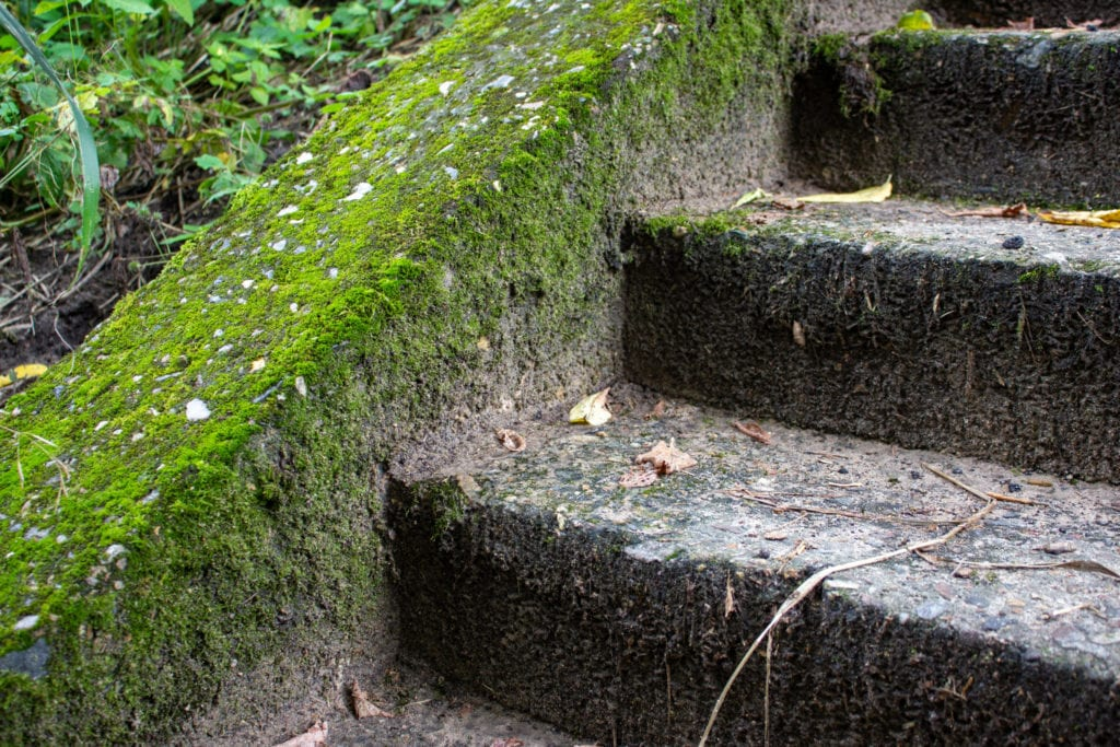 moss in backyard