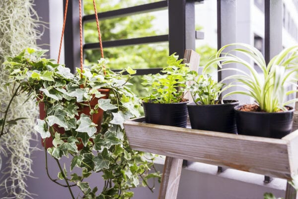 Plants on an apartment balcony